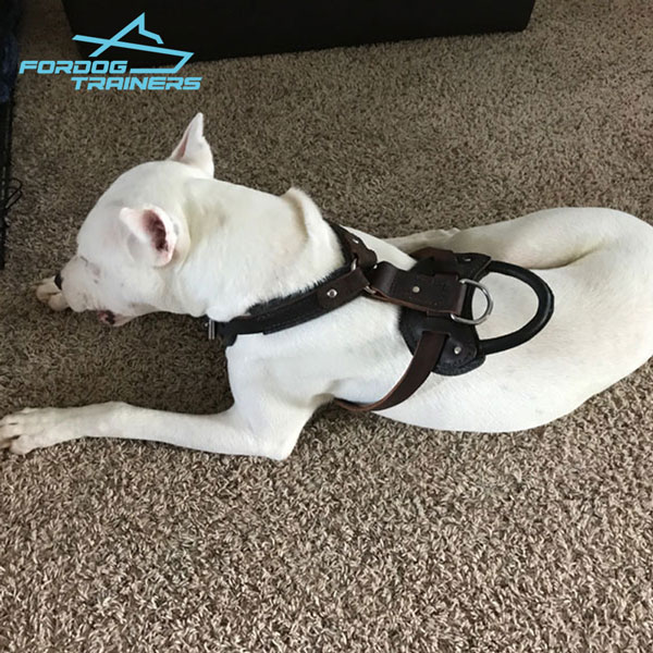 Y-shaped Leather Dog Harness Padded for Safe Training