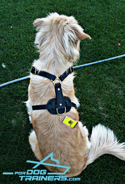Golden Retriever Harness with Padded Back