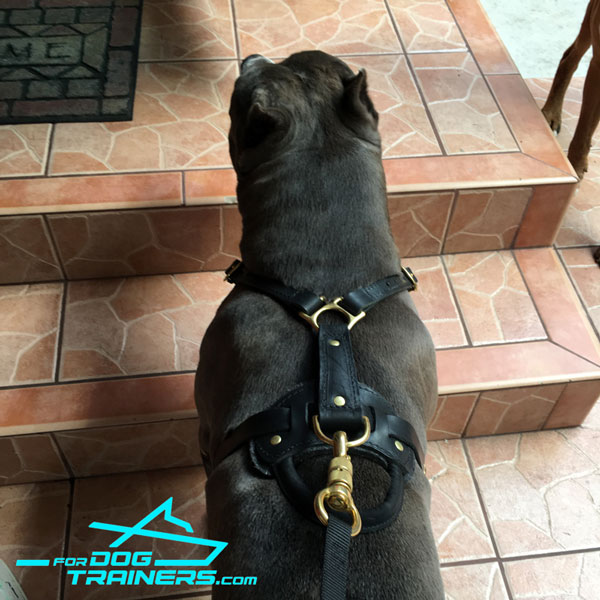 Softly Padded Leather Harness for Axel Training