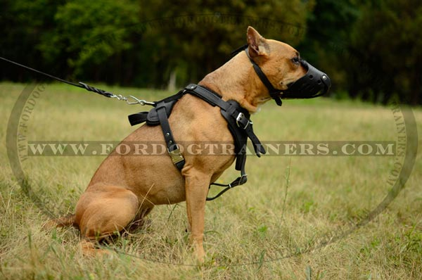 Easy quick release buckle for walking leather Pitbull harness