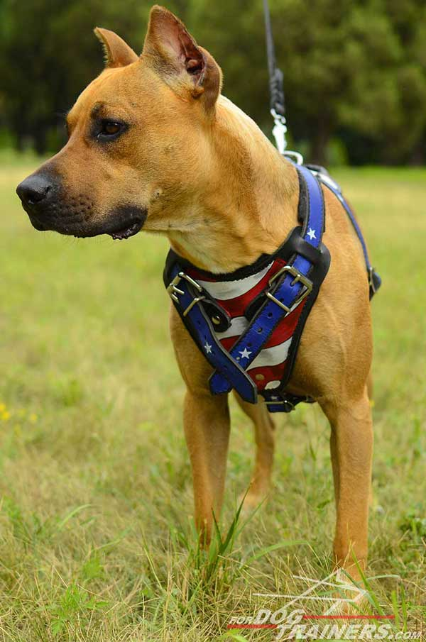 Handpainted American Pride leather Pitbull harness