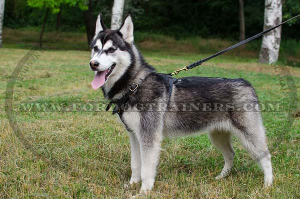 Adjustable Leather Siberian Husky Harness