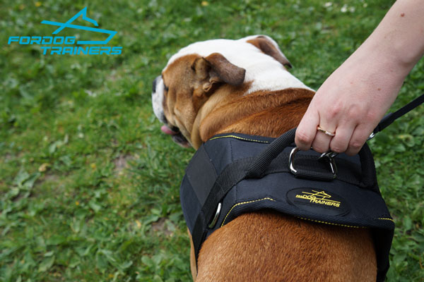 Any Weather Dog Harness for English Bulldog Walking