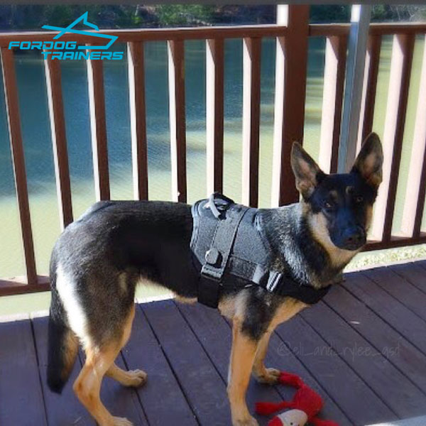 Any Weather German Shepherd Harness for Best Control