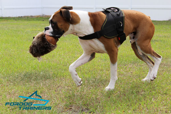 Any Weather Training Dog Harness for Boxers