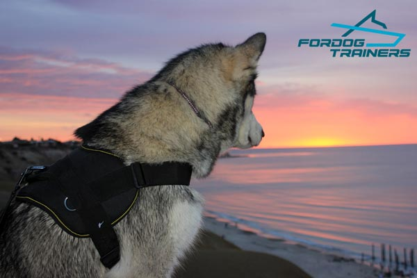 Walking and Training Extra Durable Nylon Dog Harness for Malamute