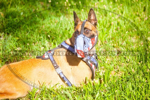 Malinois handcrafted leather harness for walking