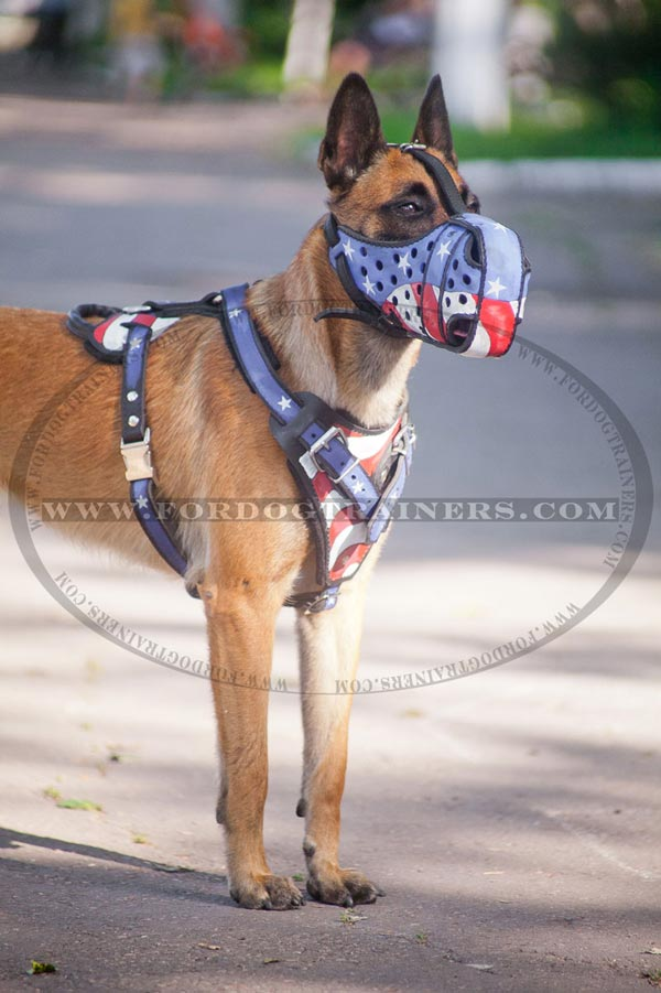 Exclusive leather harness for Malinois