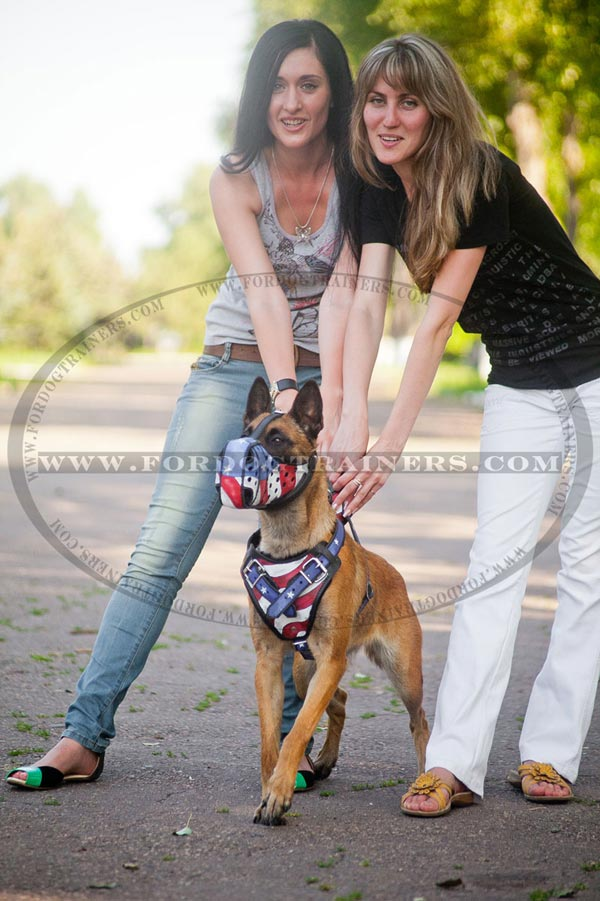 Exquisite leather harness for Malinois walking