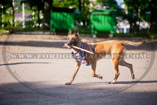Lightweight leather harness for Malinois