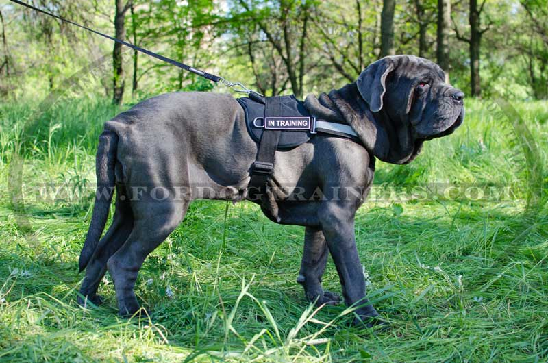 Nylon Dog Harness With Reflective Strap For Training Walking Police Service Sar And More P 3608 on canine tracking harness