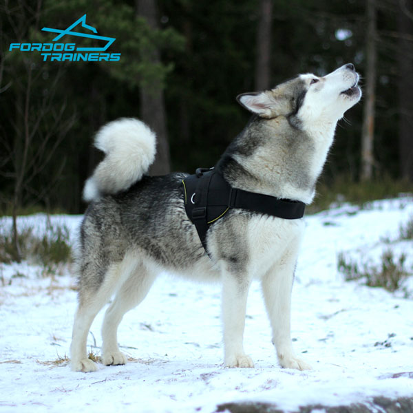 Any Weather Malamute Harness for Better Control