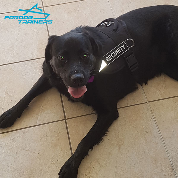 Reflective Nylon Canine Harness for Shadow Better Visibility