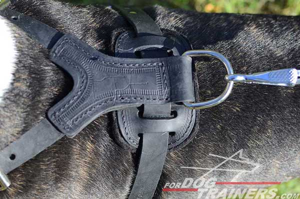 Durable Nickel Plated D-Ring on Leather Bull Terrier Harness Spiked