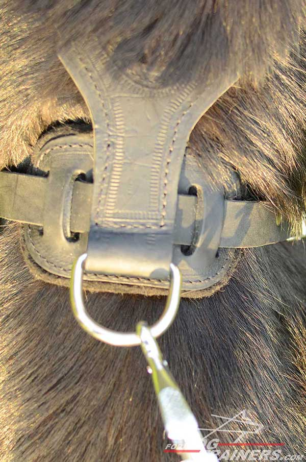 Nickel Plated D-Ring on Leather Walking Dog Harness