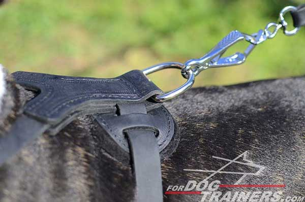Nickel Plated Hardware on Leather Spiked Bull Terrier Harness