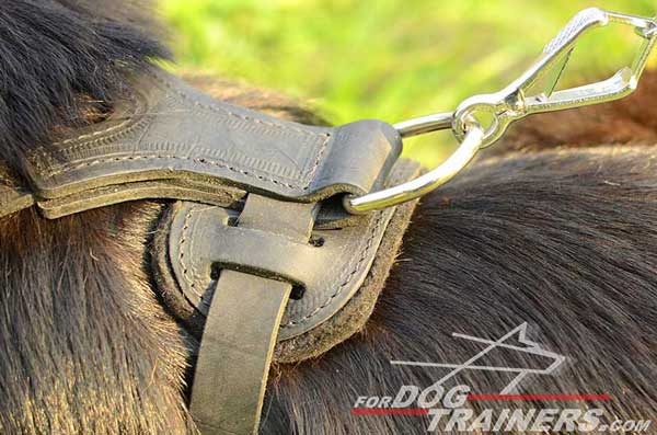 Nickel Plated Hardware on Padded Leather Dog Harness Back Plate