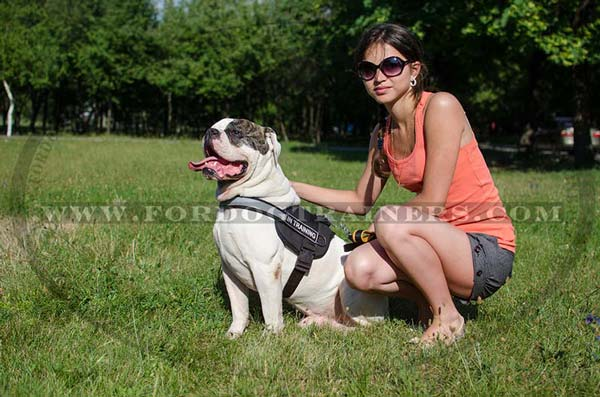 Nylon American Bulldog Harness with Reflective Strap