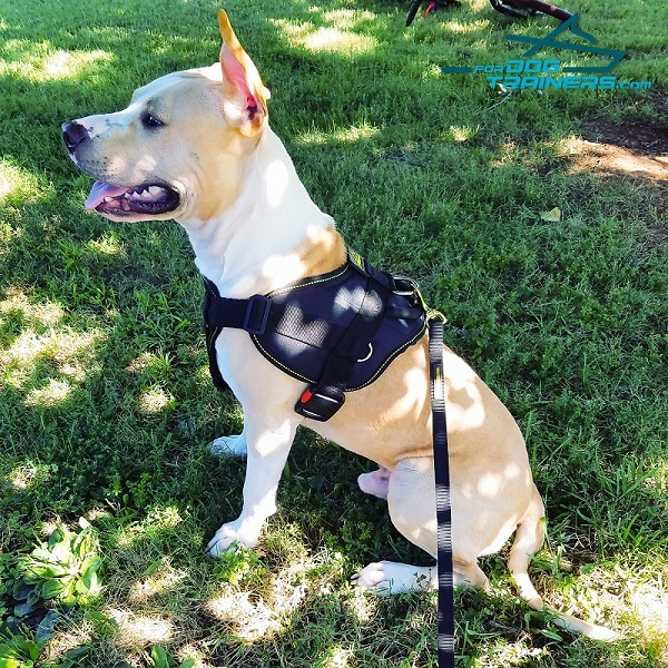 Nylon Amstaff Harness for Any Purpose Your Dog Needs