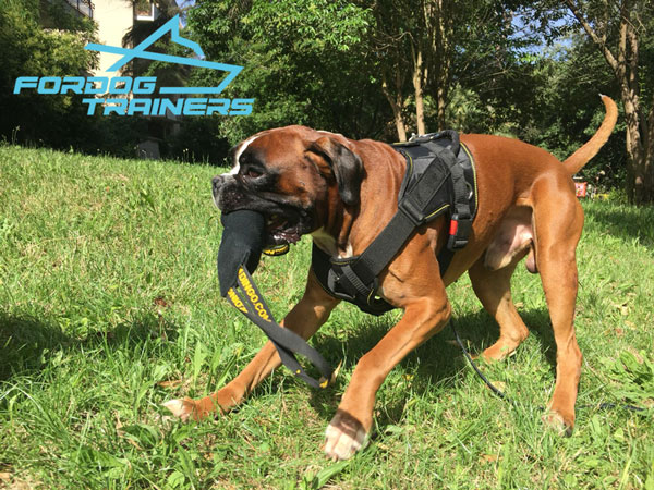 Easy to Control Working Dog Harness for Daily Training
