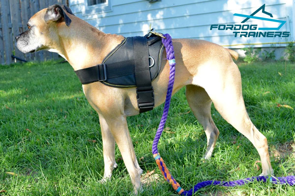 Adjustable Nylon Boxer Harness with Quick Release Buckle