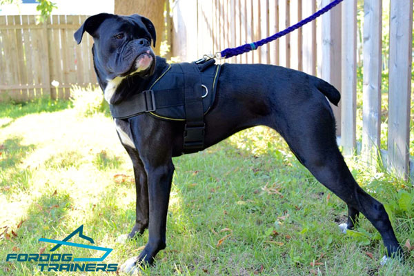 Nylon Boxer Harness - the Best for Daily Walking