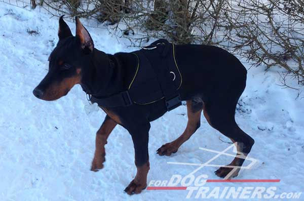 Training Nylon Doberman Harness with handle