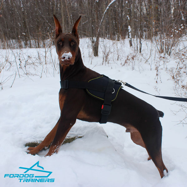 Any Weather Nylon Doberman Harness with Quick Release Buckle