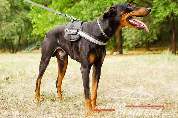 Reflective nylon Doberman harness