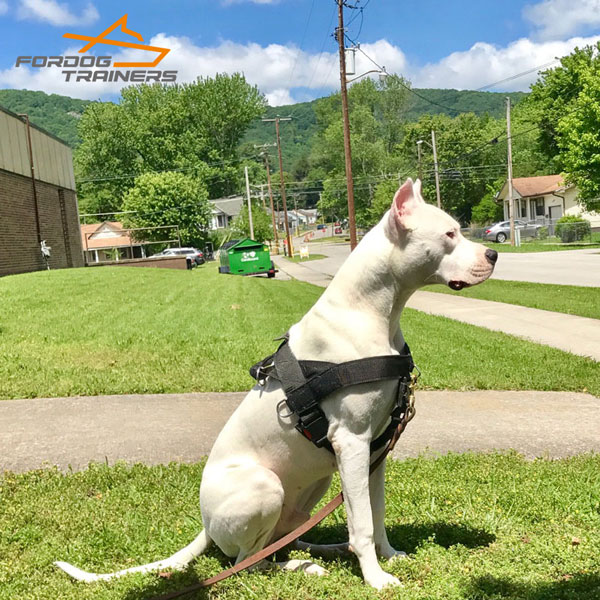Multi-purpose Nylon Dog Harness for Strong Breeds