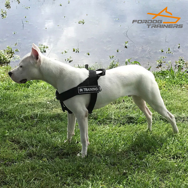 Multitasking Nylon Dog Harness with ID Patches