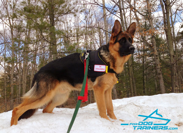 Nylon Dog Harness for Any Purpose Your German Shepherd Needs