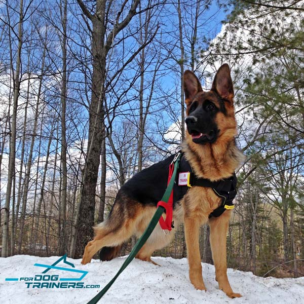 German Shepherd harness with comfortable chest plate for pro training