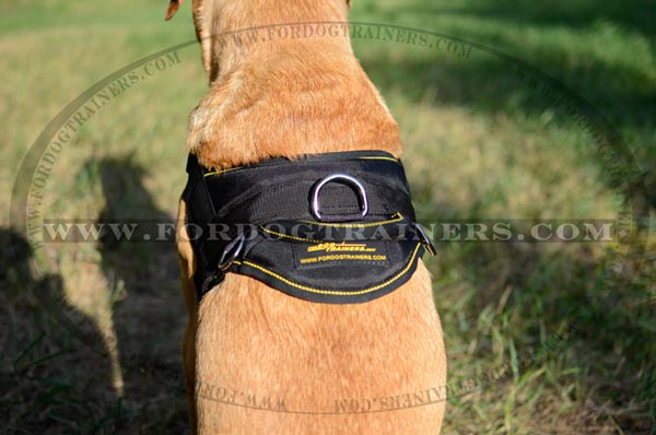 Comfy durable handle for nylon pulling Labrador harness