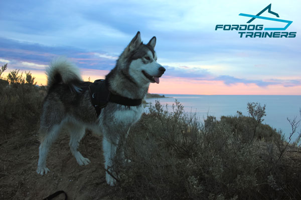 Any Weather Nylon Malamute Harness with Quick Release Buckle