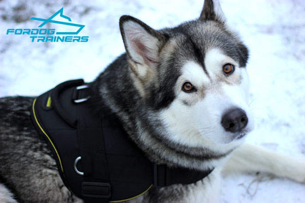 Light in Weight Nylon Malamute Harness with Comfy Handle