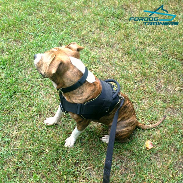 Pitbull Nylon Harness for Large and medium Breeds