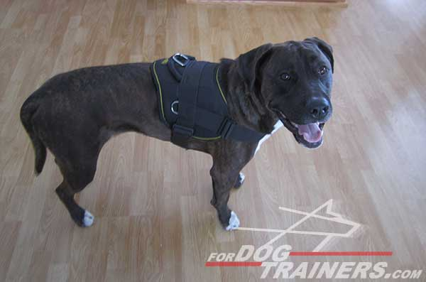 Easy washable nylon Pitbull harness with extra D-rings