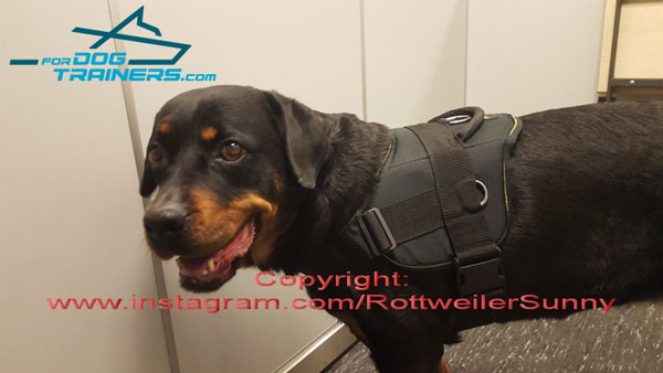 Light in Weight Nylon Rottweiler Harness with Comfy Handle