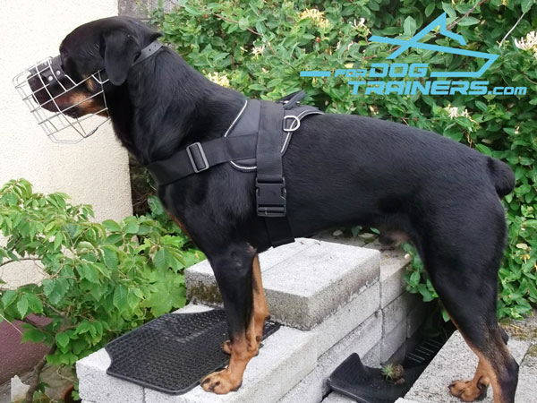 Any Weather Rottweiler Harness Made of Water-proof Nylon