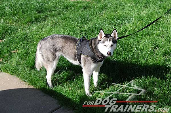 Super lightweight nylon pulling harness for Siberian Husky
