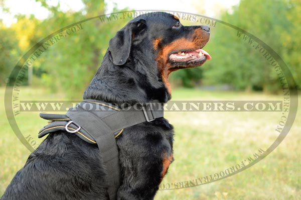 Any weather training dog harness for Rottweiler breed