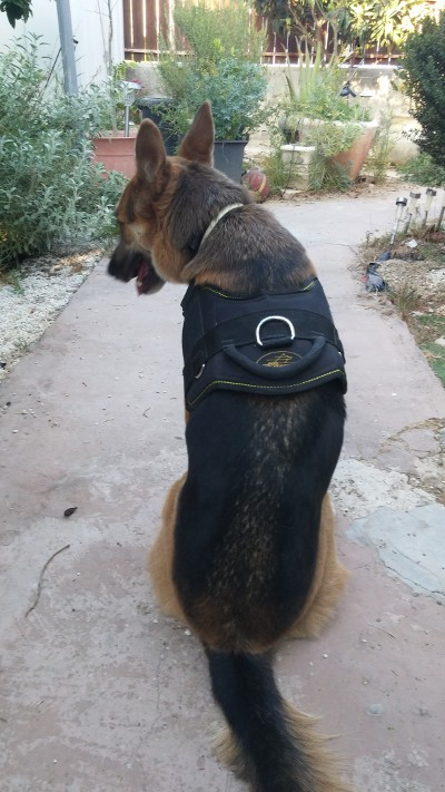 Nylon dog harness for walking