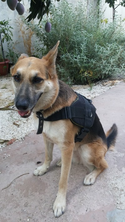Nylon dog harness for efficient training