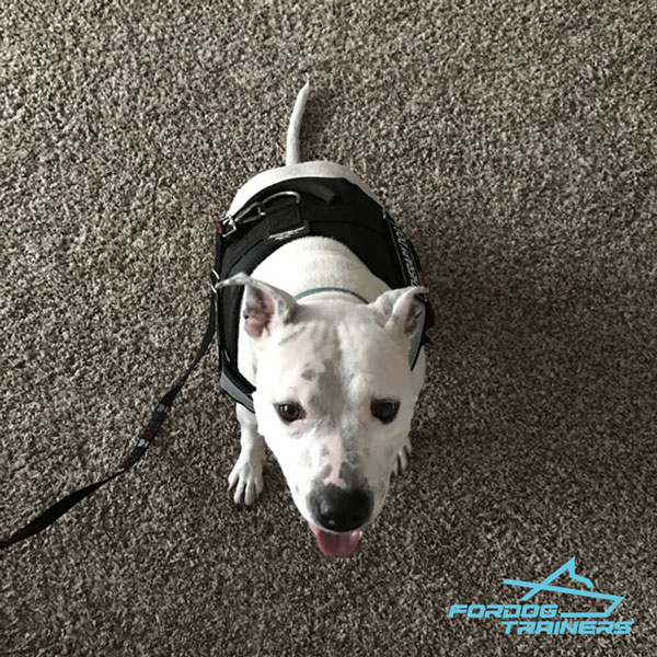 Any-weather Dog Harness Easy to Adjust