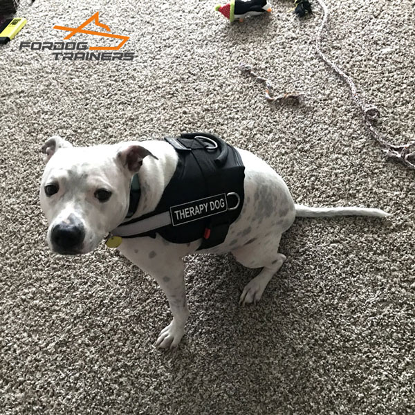 Water-proof Nylon Harness for Working Dogs