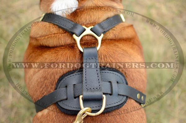 Padded Back Plate of Leather English Bulldog Harness