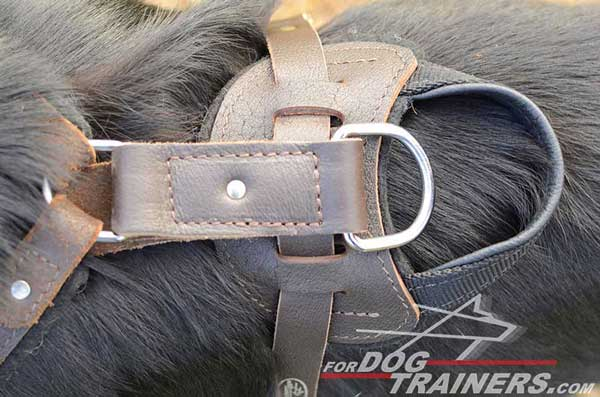 Padded Back Plate on German Shepherd Harness Leather Training