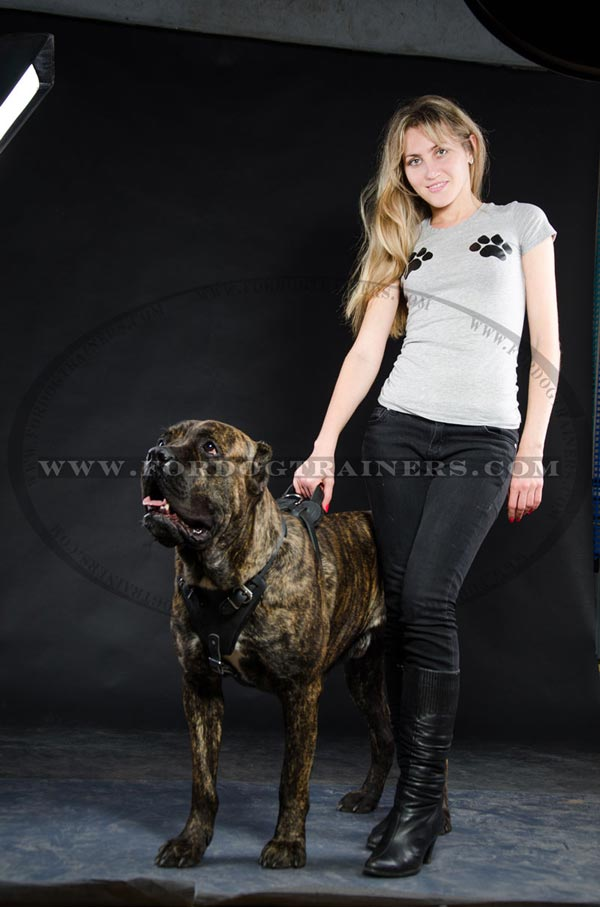 Adjustable Cane Corso Harness made of leather