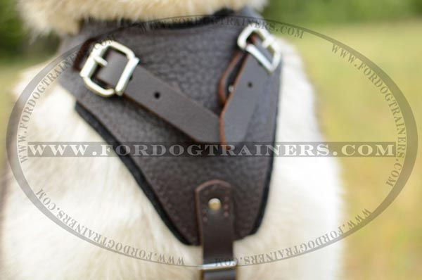 Wide Chest Plate of Leather Dog Harness for Siberian Husky